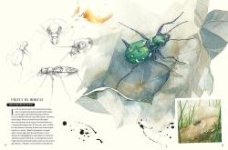 Музей живых насекомых -...